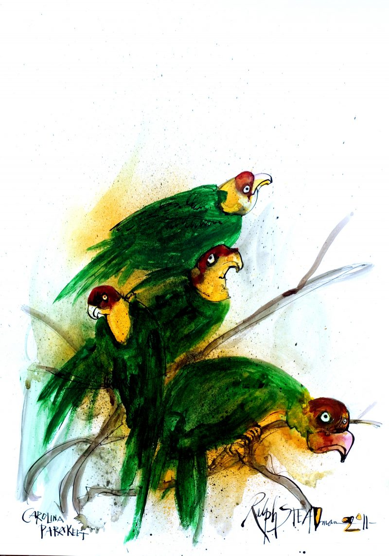 Illustrations of extinct birds by Ralph Steadman for his his first collaboration with Gonzovationist, Ceri Levy